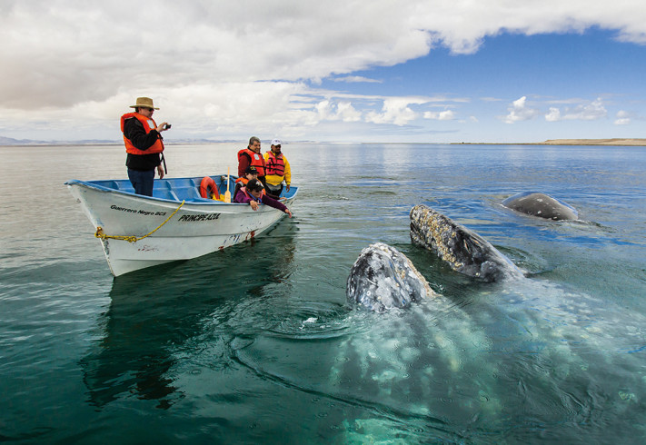 turistas mirando ballenas en El Vizcaíno